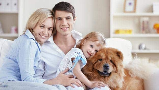 Wills & Trusts dog-young-family Direct Wills St Johns Wood